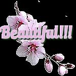 Beautiful Flower by LA-StockEmotes