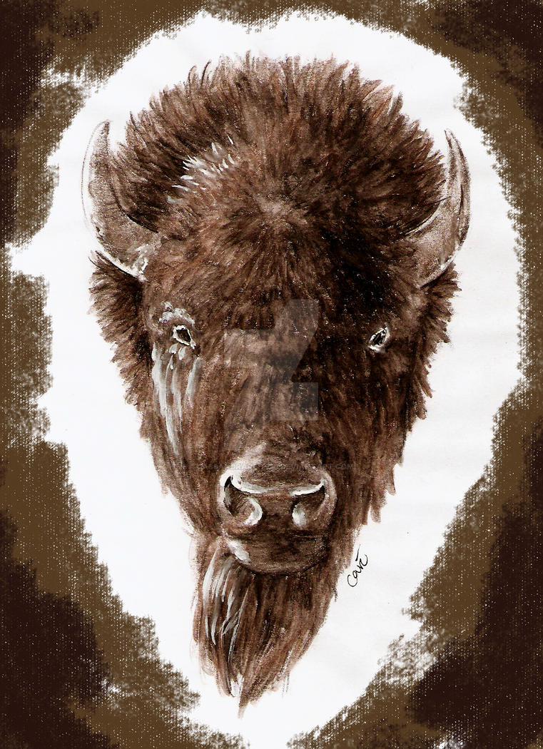 Buffalo tattoo design by cassandrareitzig on deviantart for Traditional bison tattoo