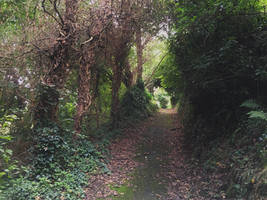 Jersey Country Lane by delboy1066