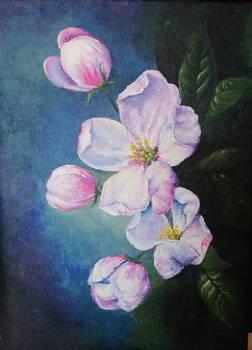 Kwiat jaboni