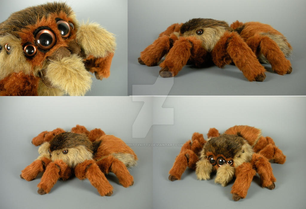 2015 Jumping Spider By WhittyKitty On DeviantArt
