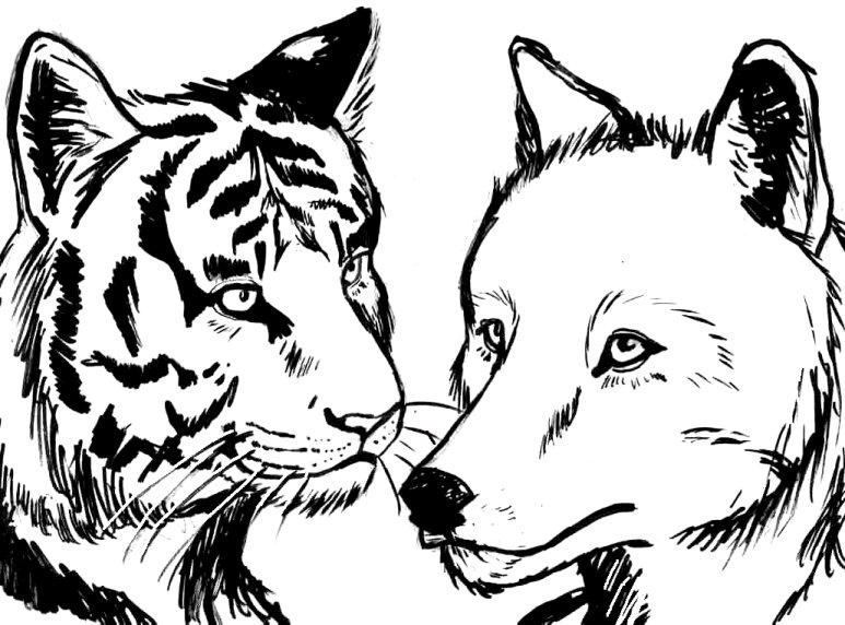 Lineart Wolf Tattoo : Tiger and wolf lovers lineart by wildspiritwolf on deviantart