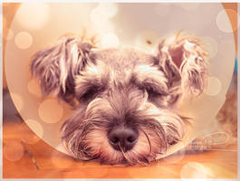 Dreaming of Toys And Cookies by Laura-Skeff