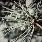 frosty memories