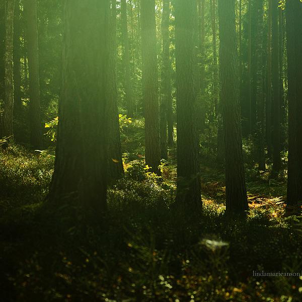 I tiptoe through the magic forest by LindaMarieAnson