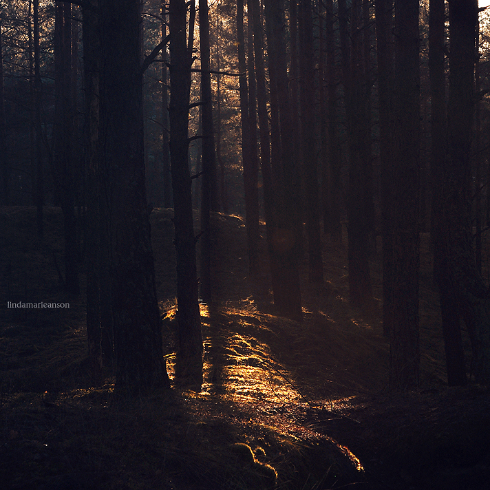 Echoes In The Fairy Forest by LindaMarieAnson