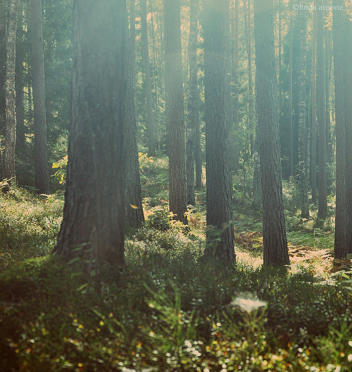 tranquil forests by LindaMarieAnson