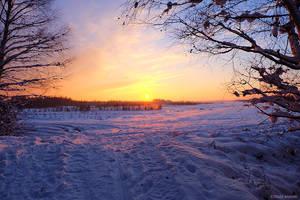 Snowed In Peat Fields