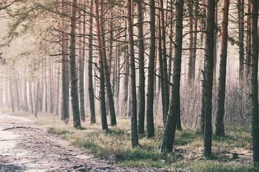 Woods in Ziepniekkalns by LindaMarieAnson