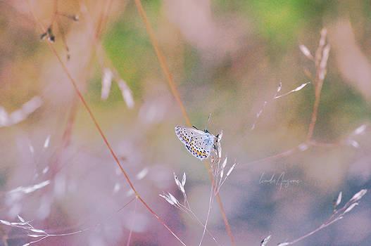 Butterfly Haze