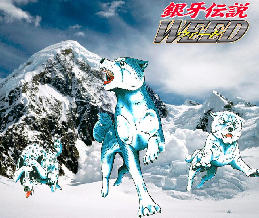 Qué anime/manga estas viendo y qué te parecen? Ginga_densetsu_weed_wallpaper_by_lugiaisawesome-d328rkk