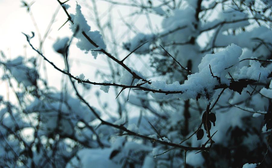 Snoww by Simplepics