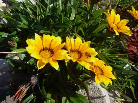 Beegining Spring