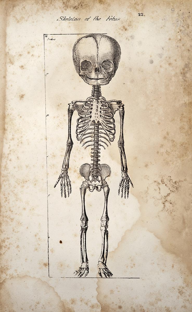 Anatomical print XL Foetus Anatomy Bourgery Victorian Wall Art 163 YEARS OLD 1854 Fetus