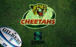 Cheetahs by W00den-Sp00n