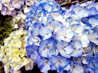 Flowers 6 by W00den-Sp00n