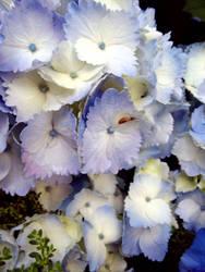 Flowers 4 by W00den-Sp00n