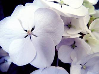 Flowers 3 by W00den-Sp00n