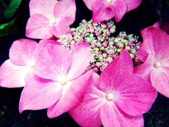 Flowers 2 by W00den-Sp00n