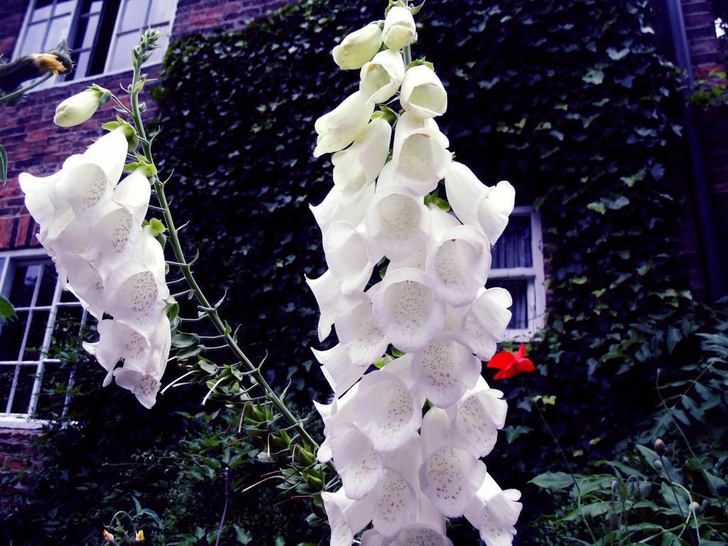 Flowers 5 by W00den-Sp00n