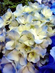 Flowers 1 by W00den-Sp00n