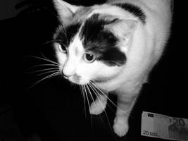my cat by nefeli3