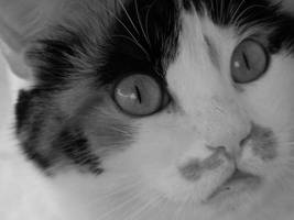 a cat by nefeli3