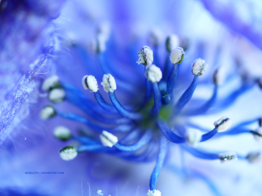 Blue Flower No2 by seneleth