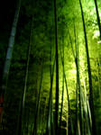 bamboo in the light by Mikkoron