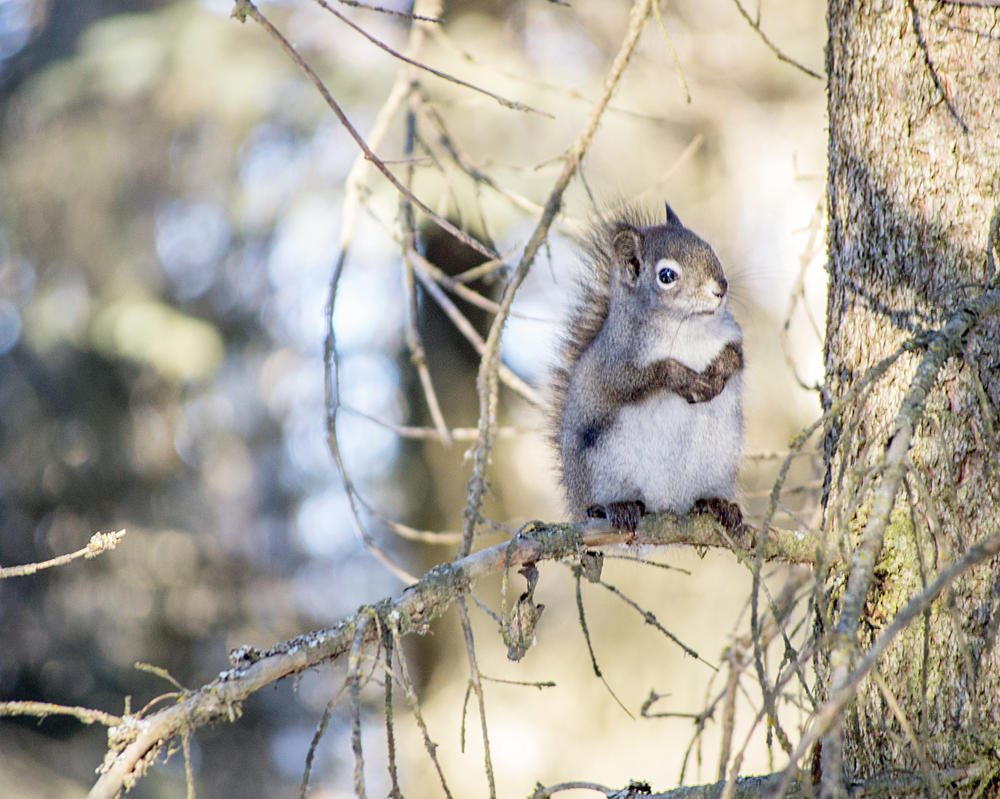 Squirrel by MkshftChrstian