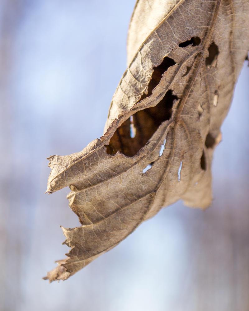 Leaf by MkshftChrstian