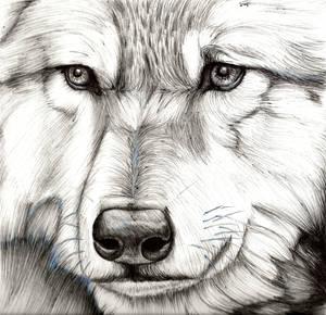 Biro Wolf