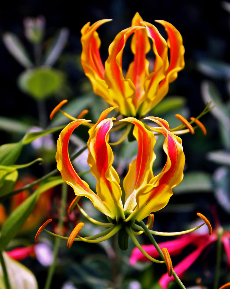 crazy looking flowers by photodreams13 on deviantart