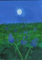 Bluebonnets at Night