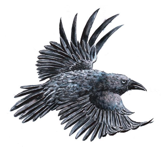 Blackbird by Wai-Jing