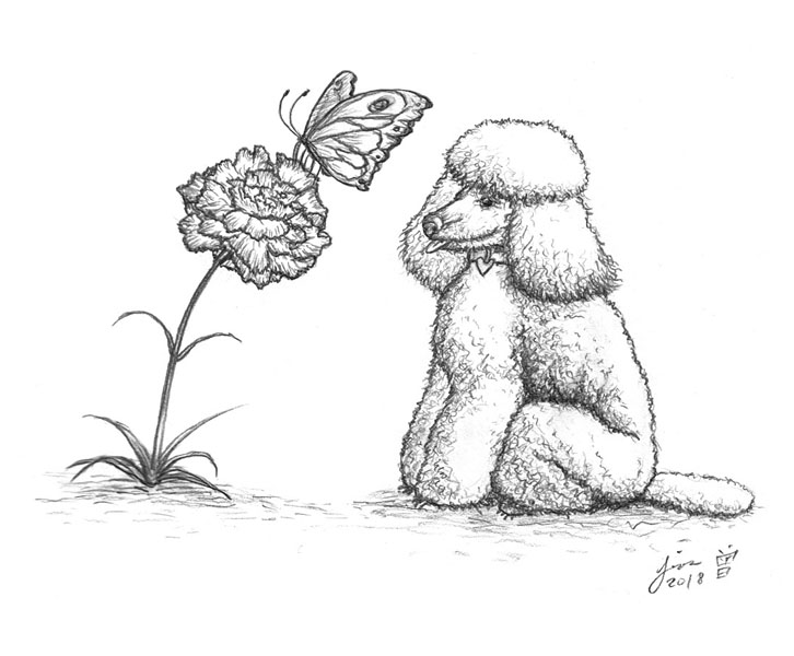 Poodle and papillon by Wai-Jing