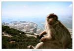 Monkey and the Jungle II