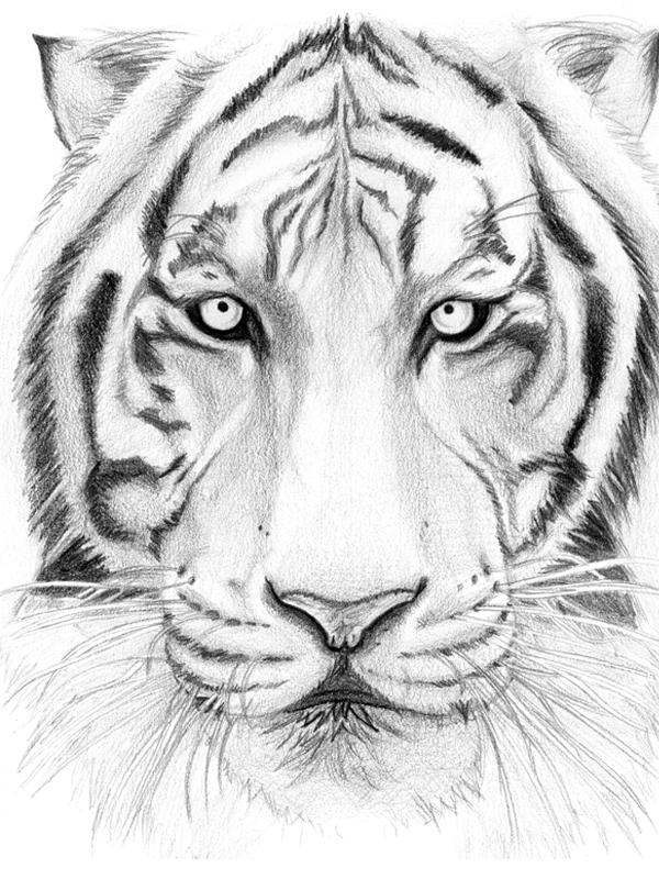Drawing - Tiger By Fernandasabaudo On DeviantArt