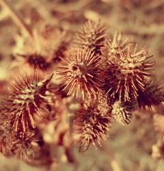Thorns by Auriferous-art
