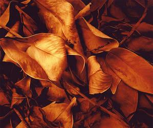 Gold by Auriferous-art