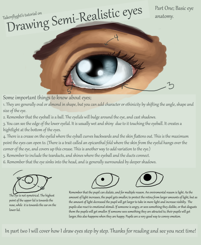 Eyes Part 1 - Basic Anatomy by TakenFlyght on DeviantArt