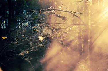 webs on tree by Gyyncius