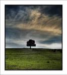 Sky and Tree by Rykardo