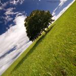 Big Tree by Rykardo