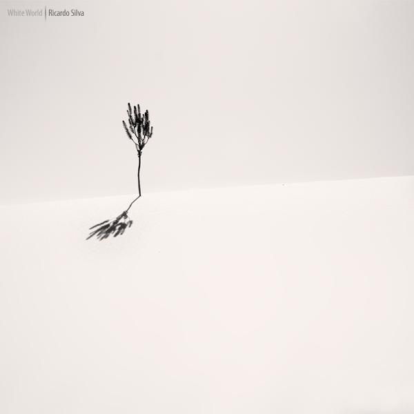 White World by Rykardo