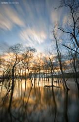 In Water by Rykardo