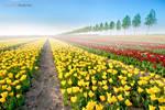 Tulips World by Rykardo