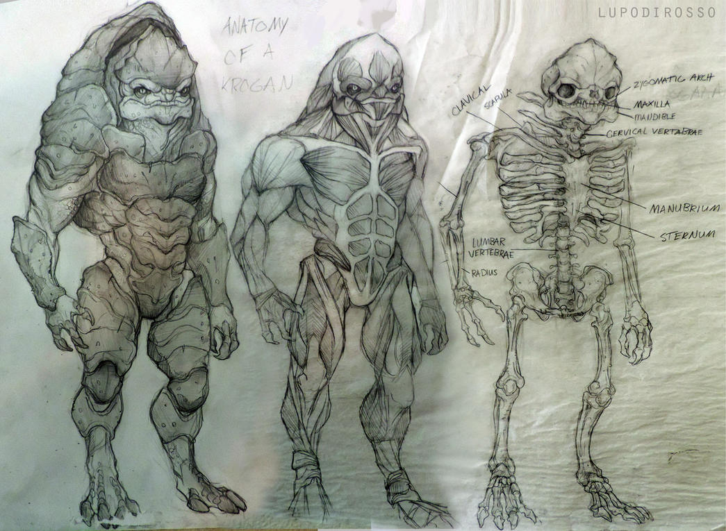 anatomy of a krogan by lupodirosso