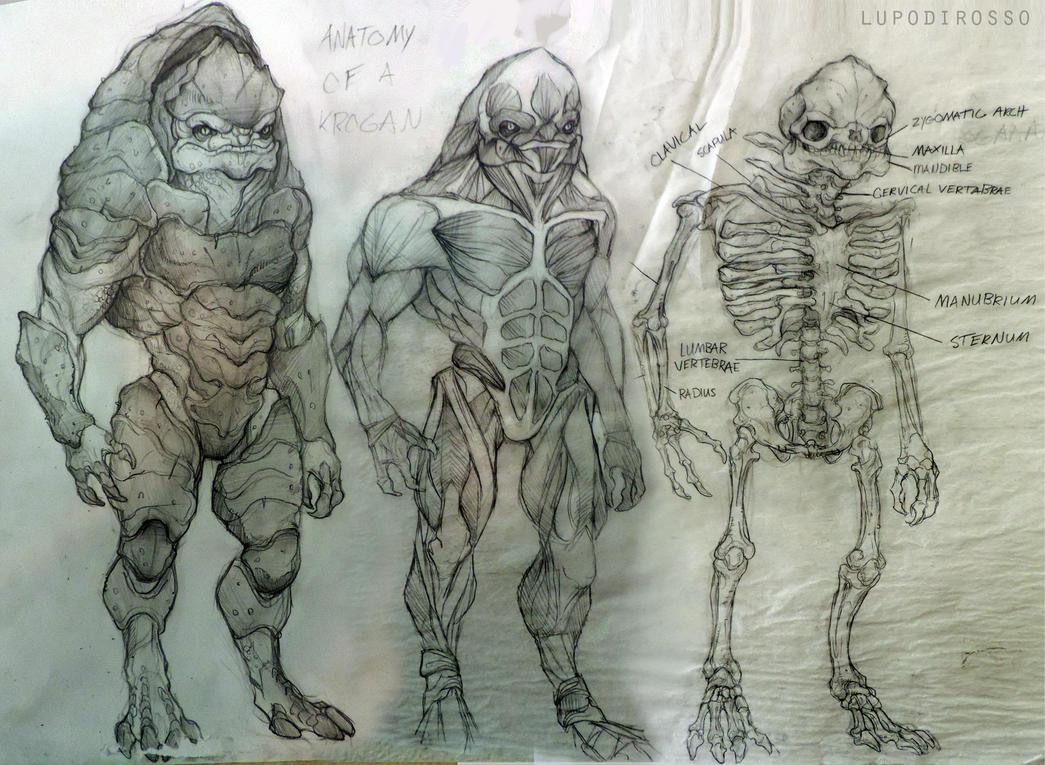 anatomy of a krogan by lupodirosso