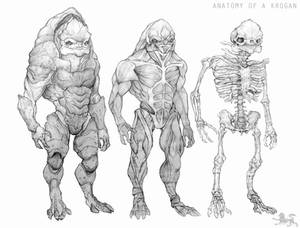 anatomy of a krogan CLEAN VERSION
